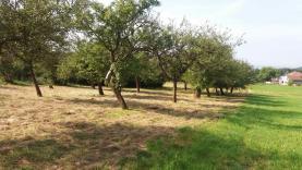 (Prodej, ovocný sad, 5 656 m2, Třemošnice - Skoranov), foto 3/5