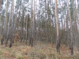 Prodej, les, Výžerky, okr. Praha- východ