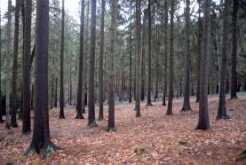 Prodej, les, Konecchlumí