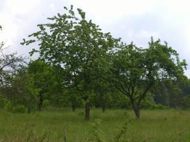 (Prodej, zahrada, 4.598 m2, Kolová u Karlových Varů), foto 4/9
