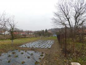 Pěstování jahod (Prodej, zahrada, Roudnice nad Labem), foto 4/20