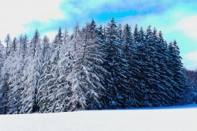 Prodej, les, 8956 m2, Slavíkov