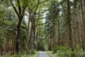 Prodej, les, 10970 m2, Lešná