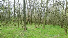 Prodej, les, 2196 m2, Znojmo