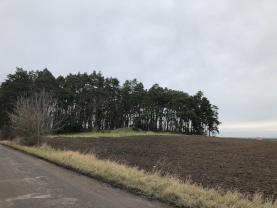 Prodej, les, 2187 m2, Slatiňany, Kunčí