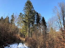 Prodej, les, 102435 m2, Řetová