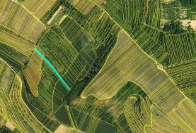 Prodej, orná půda, 2576 m2, Němčičky u Hustopečí