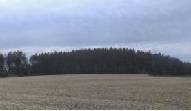 (Prodej, lesní pozemek, 9699 m2, Bučina)
