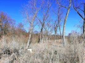 Prodej, les, 2115 m2, Kačice