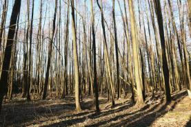 (Prodej, les, 2945 m2, Nová Ves u Chotěboře), foto 4/4