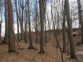 Prodej, les, 3678 m2, Kopřivnice