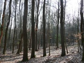 (Prodej, les, 43481 m2, Dolní Lhota), foto 4/12