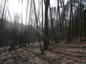 (Prodej, les, 43481 m2, Dolní Lhota), foto 3/12