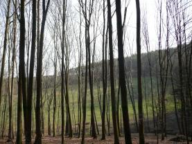 (Prodej, les, 43481 m2, Dolní Lhota), foto 2/12