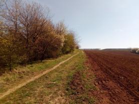 Přístupová cesta pro auto (Prodej, pozemek, 6735 m2, Český Brod - Zahrady), foto 2/11
