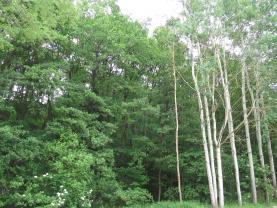 Prodej, lesní pozemek, 3835 m2, Písek - Hradiště u Písku