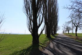 (Prodej, trvalý travní porost, 1714 m², Josefov), foto 3/15