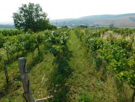 Prodej, vinice 5249 m2, Klobouky u Brna
