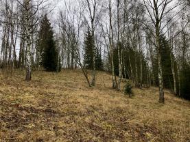 IMG_6200.jpeg (Prodej, louka, les, 5226m2, Smržovka), foto 3/20