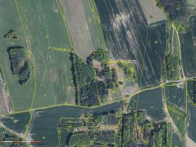 Prodej lesa, 76783 m², Skály